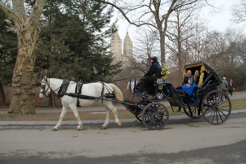Clip Clop on the back of a horse and carriage through Central Park today.. Let us provide you and your loved ones the most memorable Central Park carriage rides during your stay in New York City. Ride with the most reputable carriage ride company in Central Park. We have been proudly serving Central Park carriage rides in NYC since 1979. Family-Owned and Operated by Father & Son.