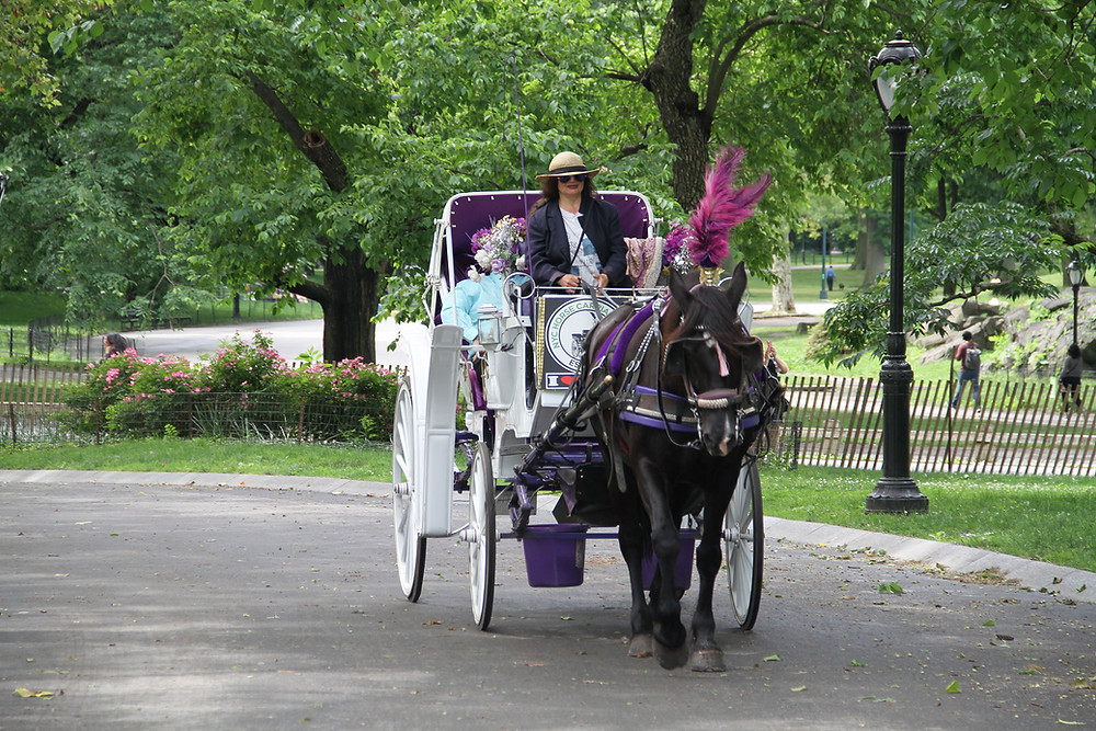 Central Park Horse Carriage Ride by NYC Horse Carriage Rides EST.1979