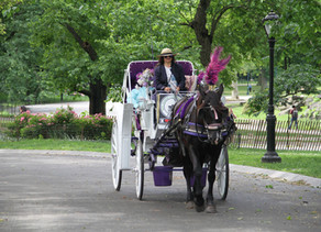 Proudly serving Central Park Horse Carriage Rides since 1979