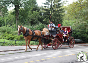 Central Park Carriage Rides Re-Opening on September 1st!