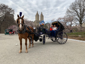 Spring Action in Central Park!