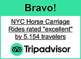 NYC-HORSE-CARRIAGE-RIDES-REVIEWS.JPG