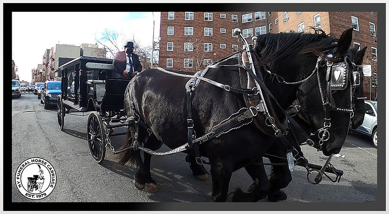 black horse-drawn hearse carriage funeral ride