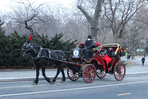 Central Park Carriage Rides during Winter Season!