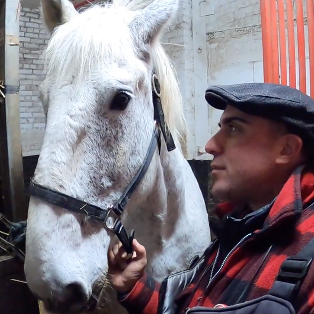 Behind Scenes @ NYC Horse Carriage Rides Stable