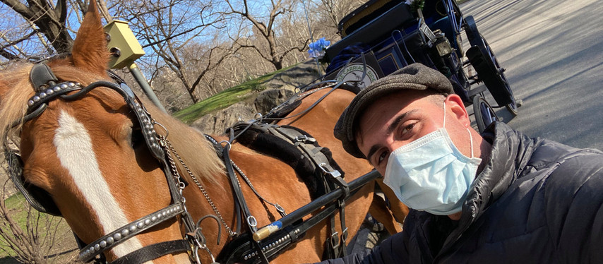 Central Park carriage horses riding out coronavirus in Amish Country by New York Post