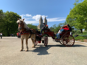 🌺🌷🌼 Spring Central Park Carriage Rides in NYC 🌼🌷🌺