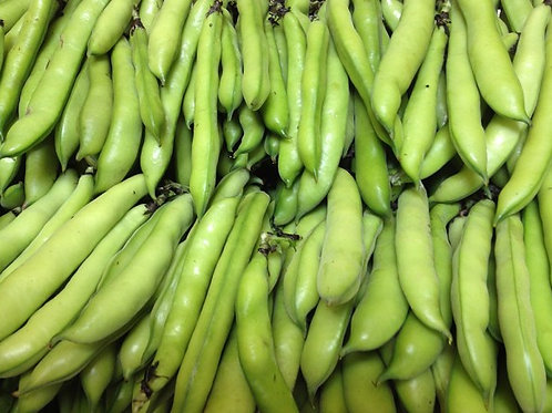 Fave, broad beans