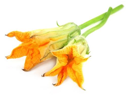 Fiori di Zucca - Zucchini flower