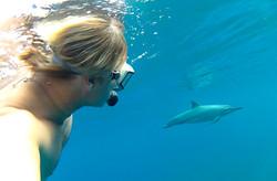 SYD_Dolphin