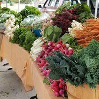 farmers market veggies at OPFM.jpg