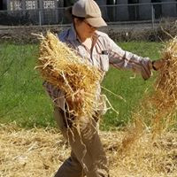 sarah spreading straw.jpg