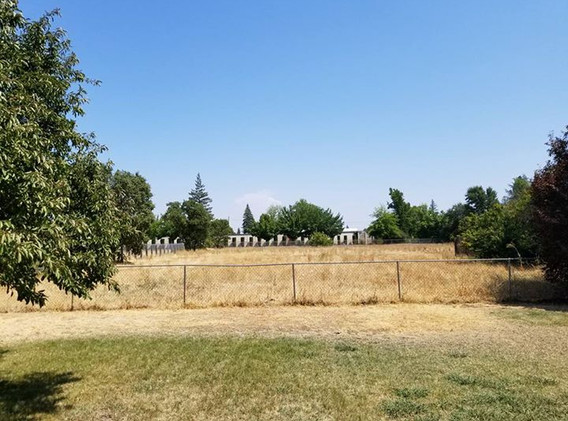 Back field in August 2017