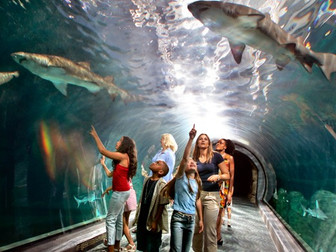 Weekend Trips for the Family - Adventure Aquarium in New Jersey