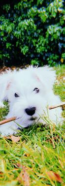 pub dog Alfie