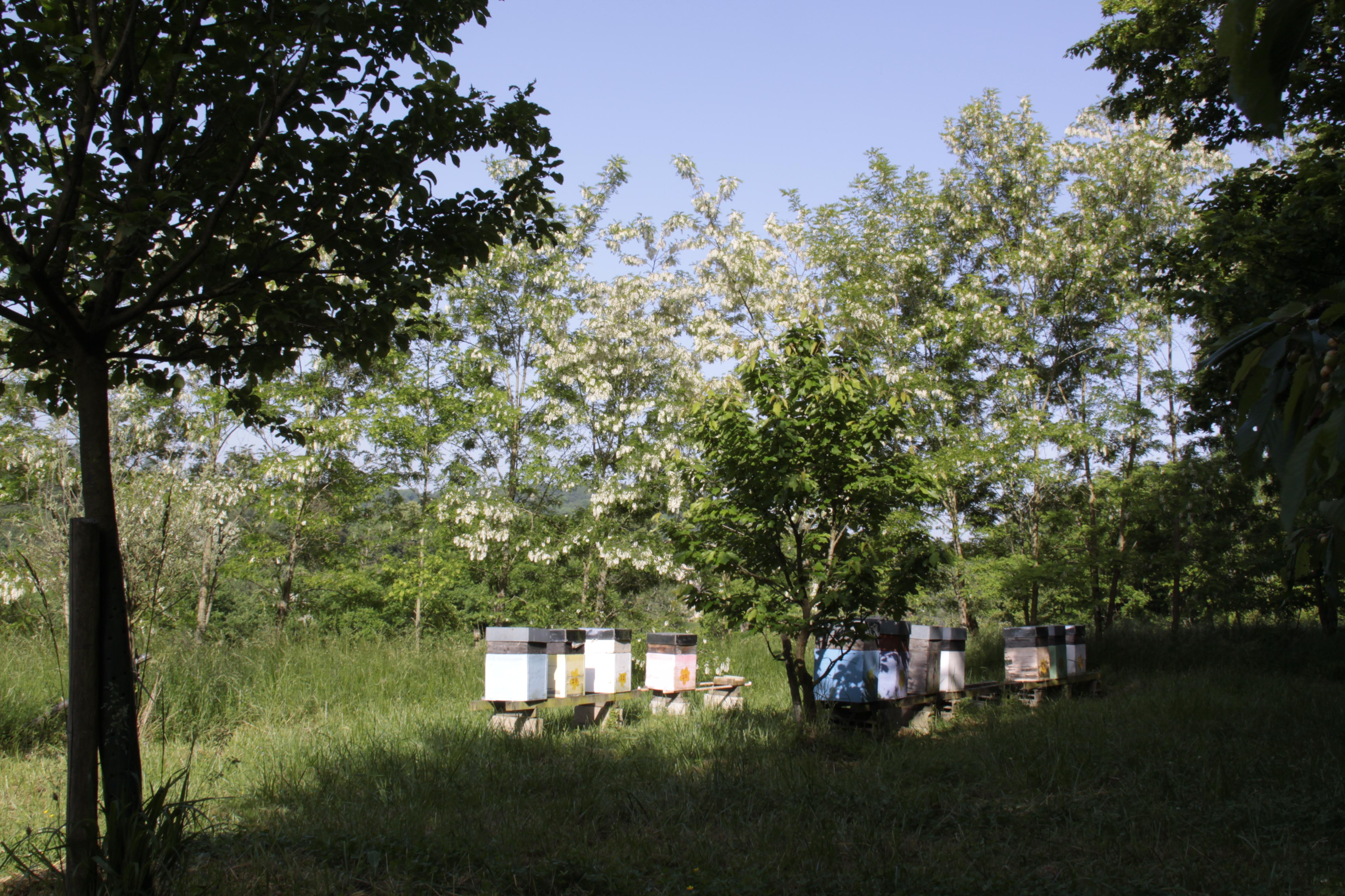 Les ruches à Varennes