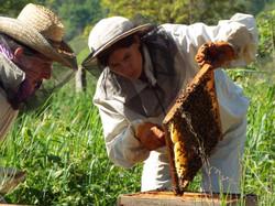 L'apicultrice