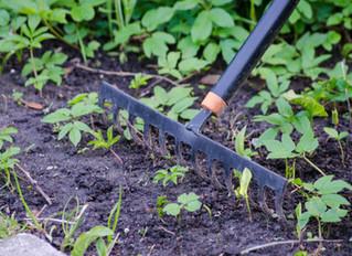 Growing Among the Weeds