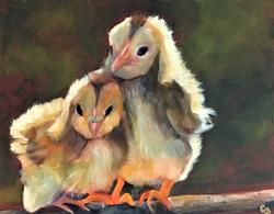 'Chicks Lit'