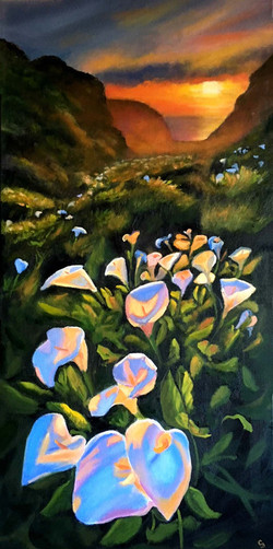 'Lily Luminaria'