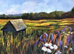 'Summer Fields'