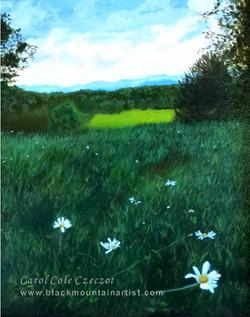 'Mountain Meadow'