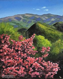 'Sally's Spring'
