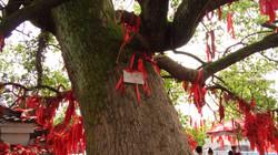 L'arbre messager