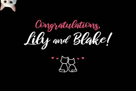 Blake&Lily Start Screen