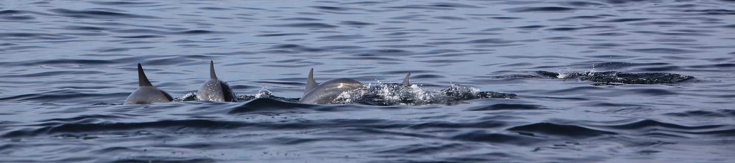 Dolphin Whale Watching Kalpitiya