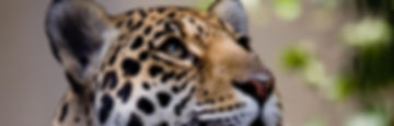 Wildlife Sri Lanka Wilpattu National Park
