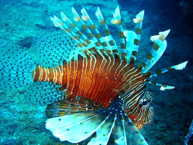 Scuba Diving Sri Lanka Kaplitiya