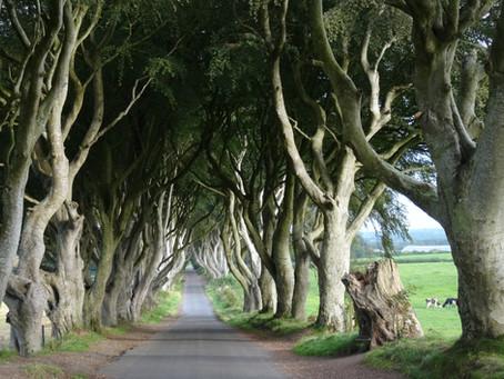 The Kingsroad