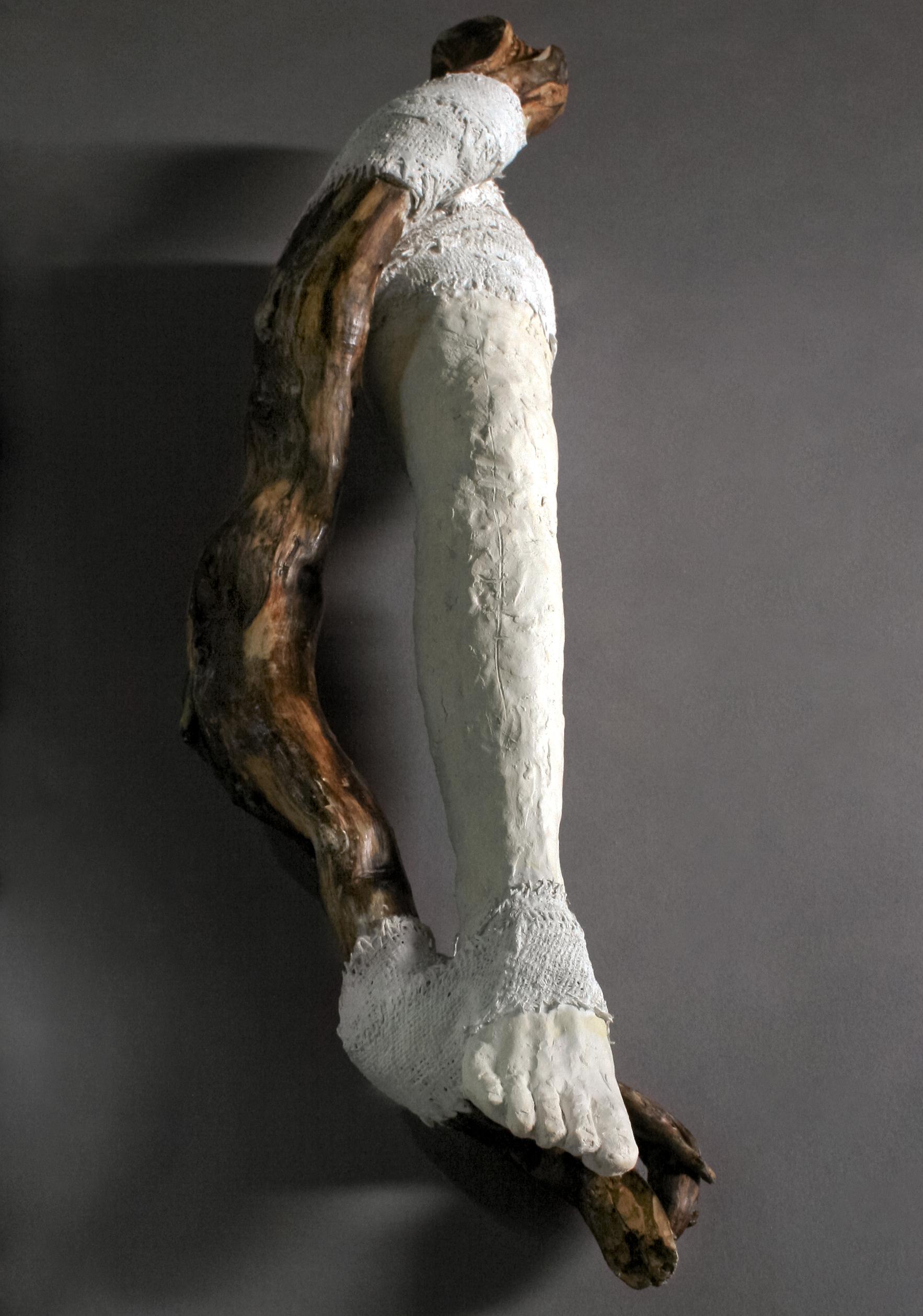 Autotomized Limb (leg)