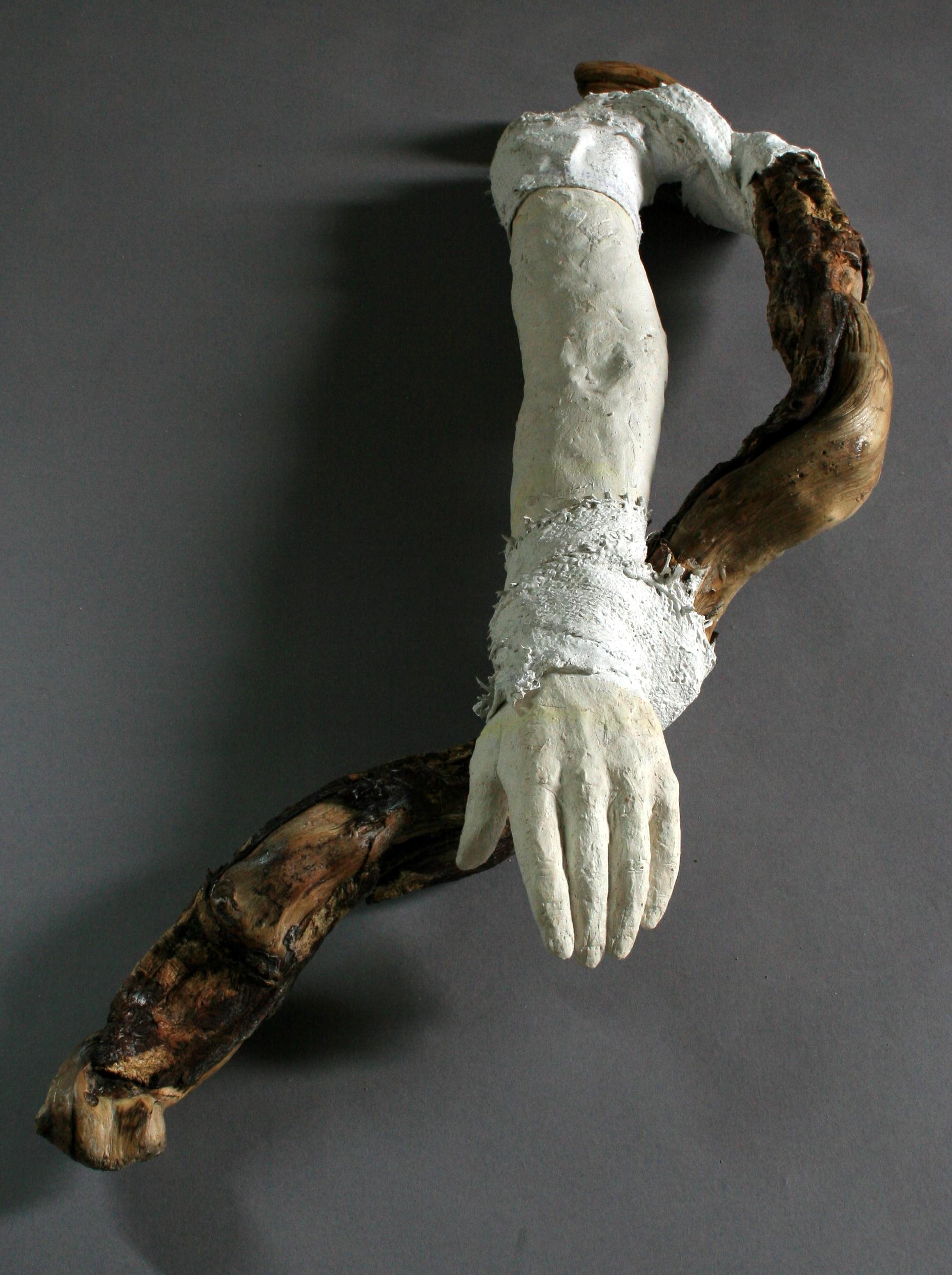 Autotomized Limb (arm)