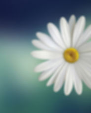 bloom-blossom-close-up-36764.jpg