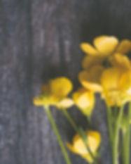 background-beautiful-bloom-1039103.jpg