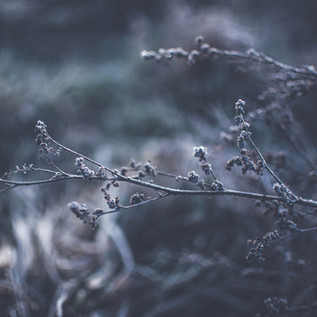 How to Protect Your Plants from Freezing Temperatures