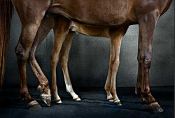 Sukkar Aezea & Foal #173