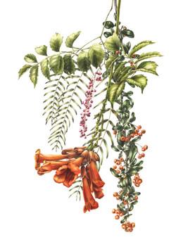 Pendulous mixed flowers