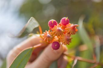 Eucalyptus Cupcake