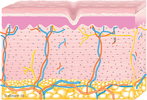 collagen_remolding_occurs-copy-1.png