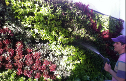 Blog Plakarq Muros verdes