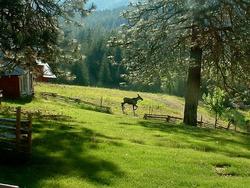 Baby moose