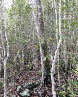 Struck Oil dry rainforest