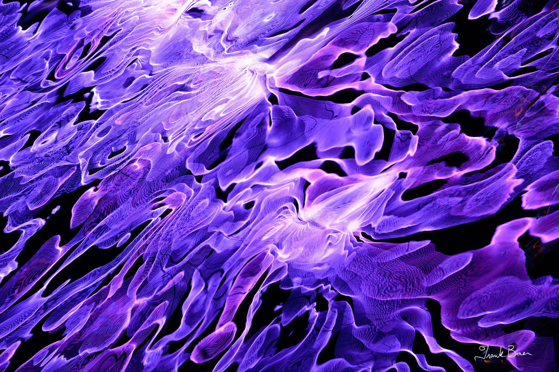 Purple Plasma 1