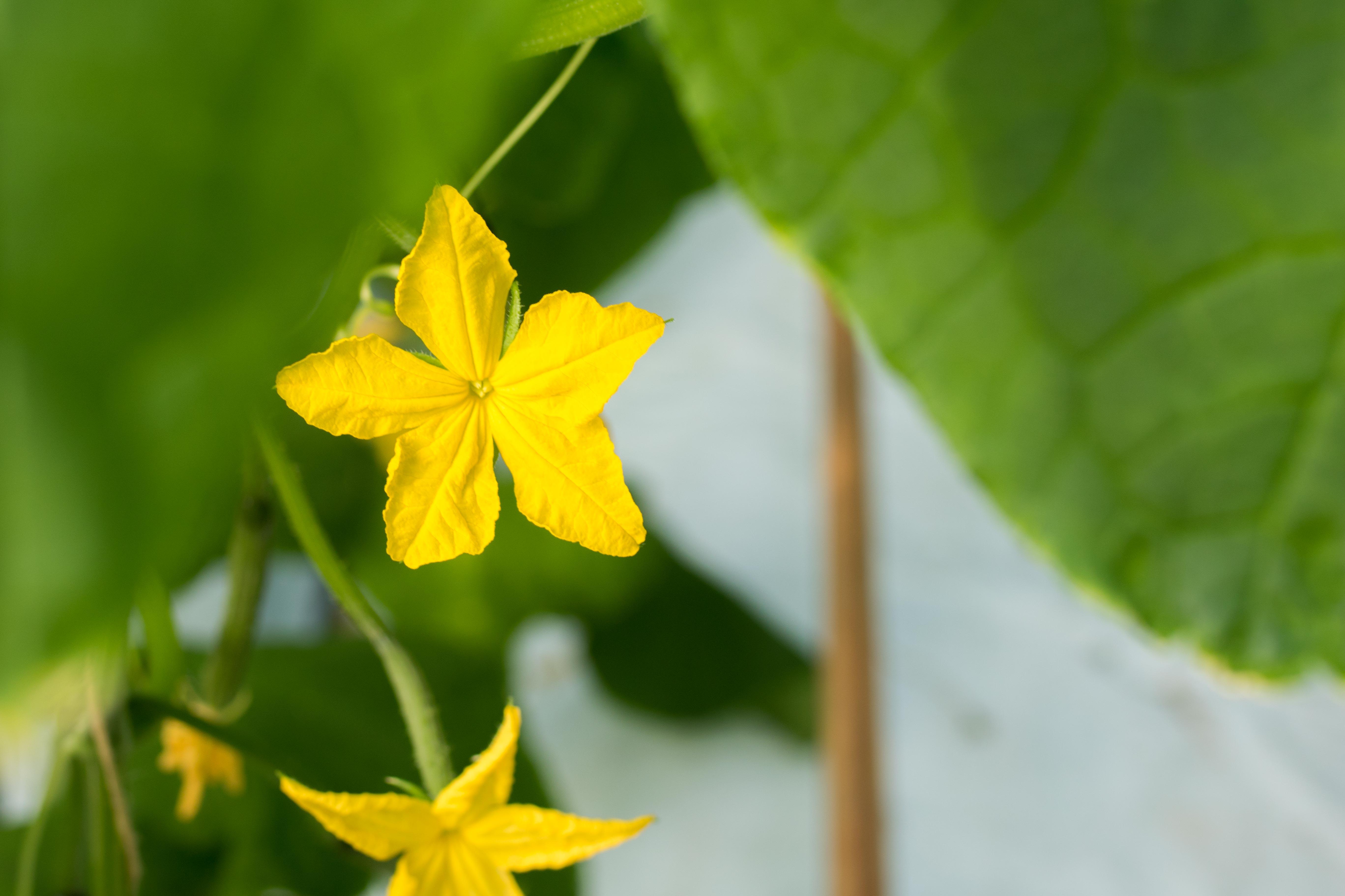Blomma-5