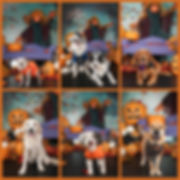 Fetch Portraits Halloween 2019.jpg