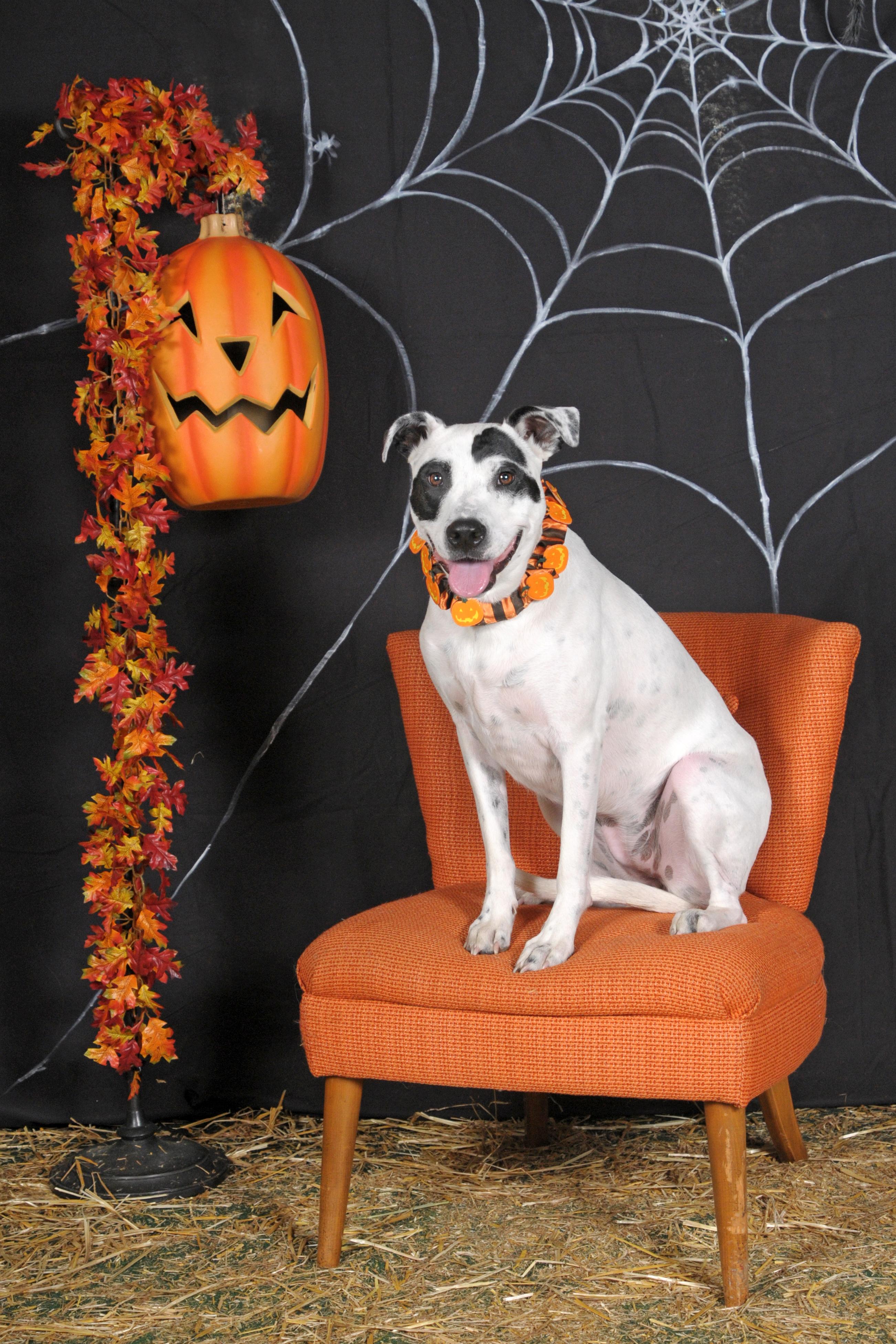 Dogaholic's Halloween 2013 291