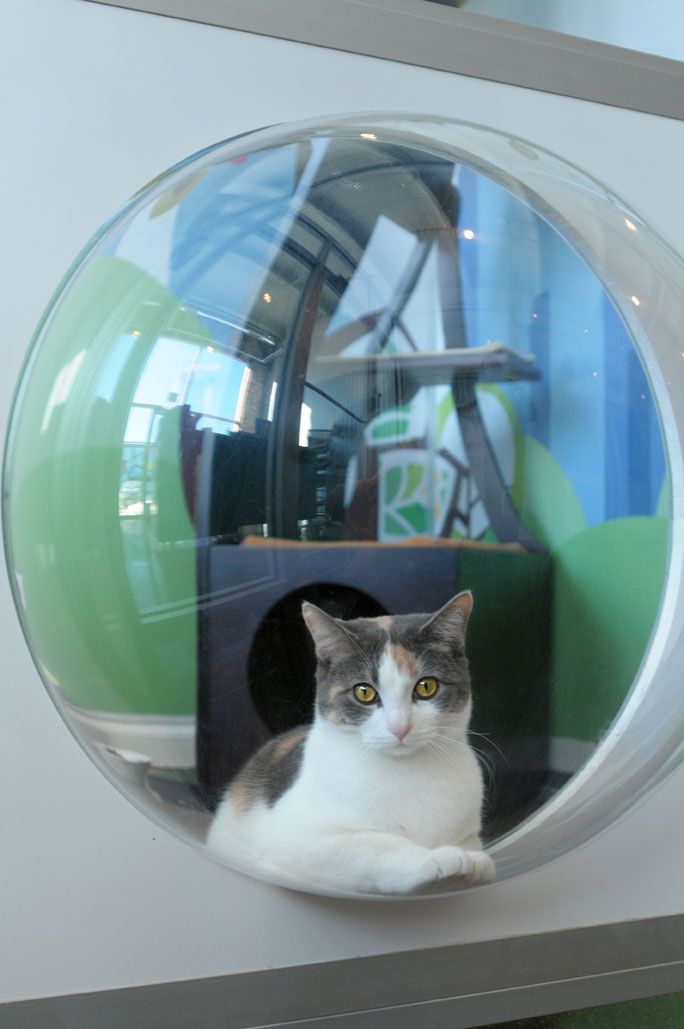 bubble_kitty_2.jpg